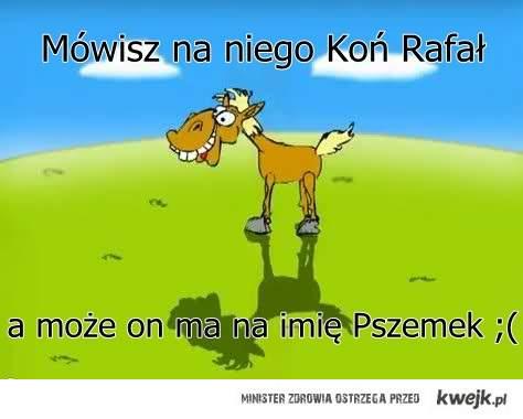 koń pszemek