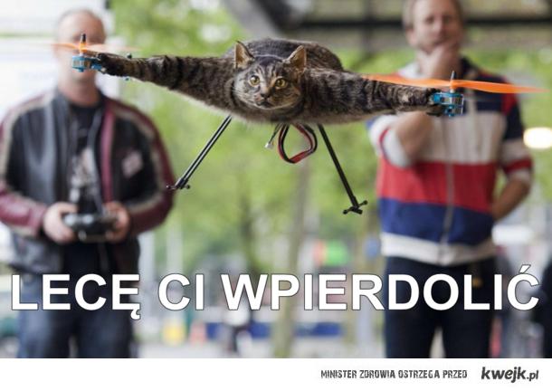 Kot helikopter leci ci wpierdolić