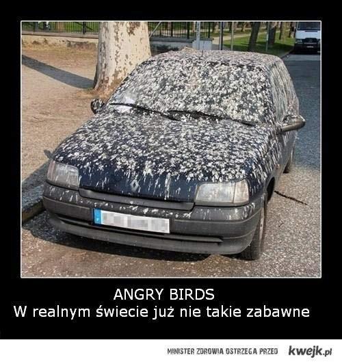 Angry Birds w realu