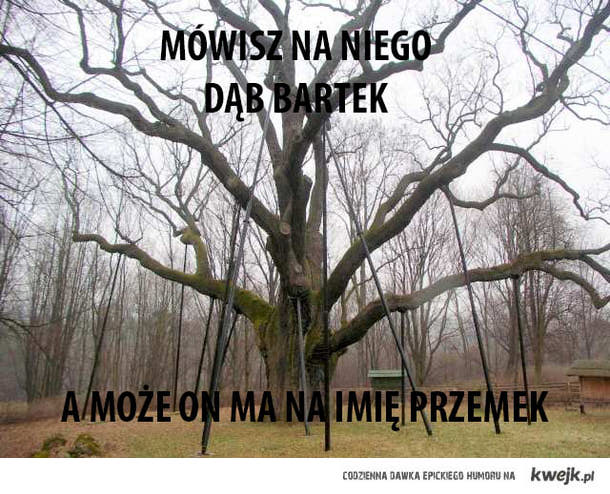 Mówisz na niego Dąb Bartek