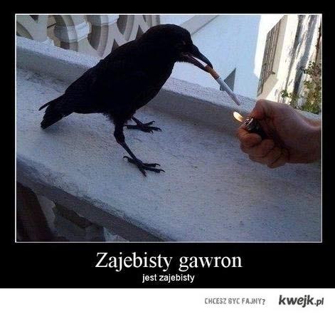 gawron