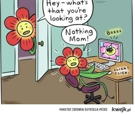 Pszczółki i kwiatki