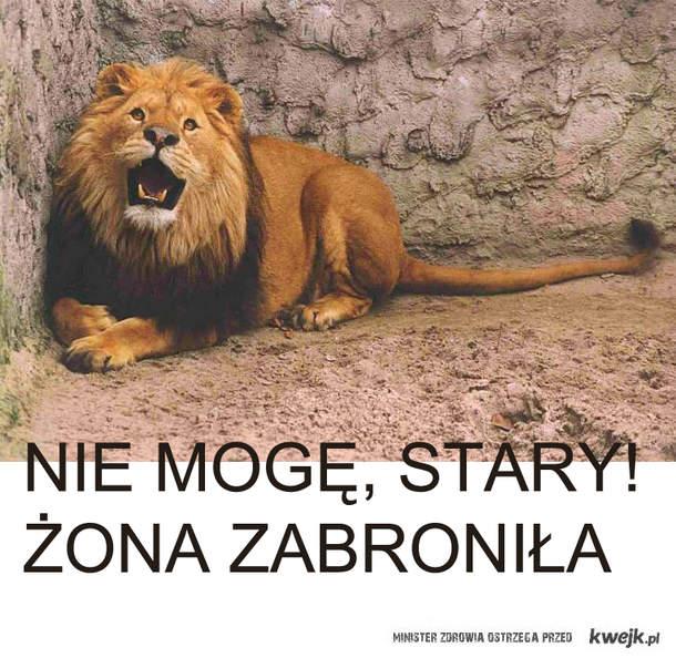 LEW PANTOFLARZ