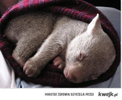 Wombat *_*