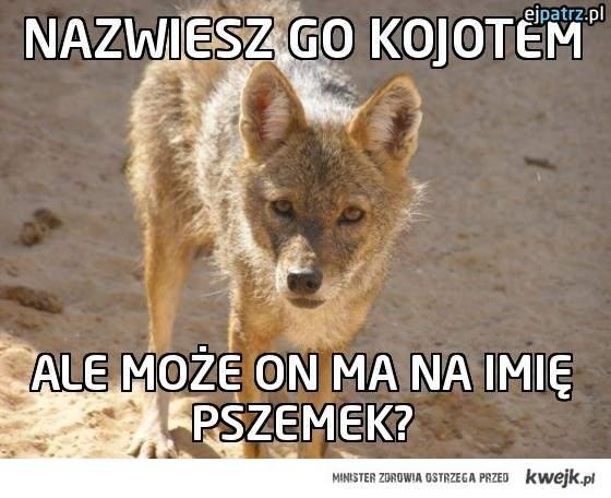 pszemek to kojot