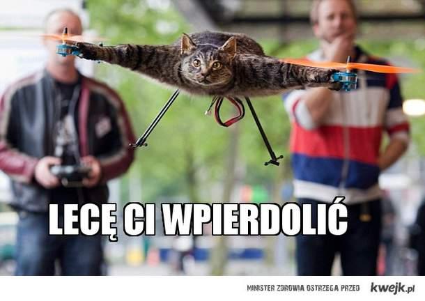 latający kot