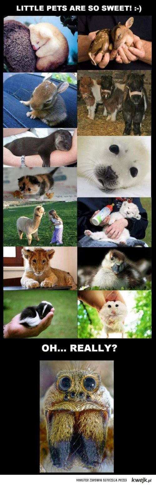 małe zwierzaczki