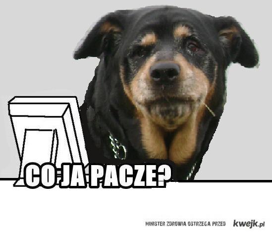 Pies paczy