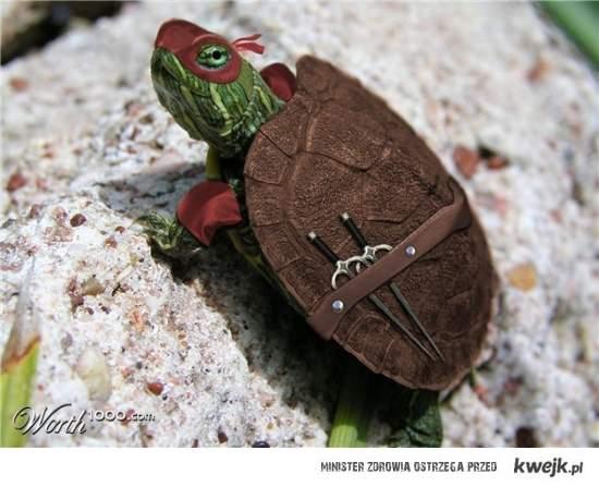 wojowniczy żółw ninja