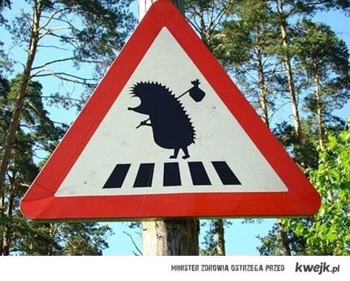 Uwaga na jeża