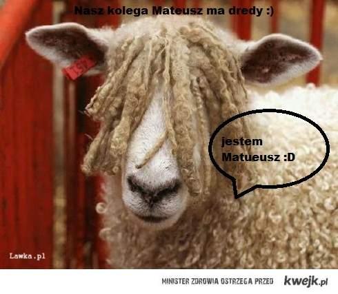 owca dredziarz :)