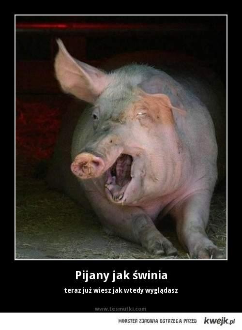 Pijany jak świnia