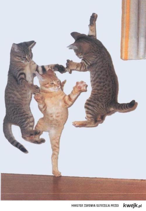 koci taniec