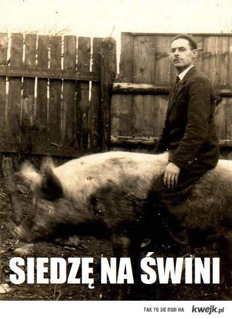 siedzę na świniaku