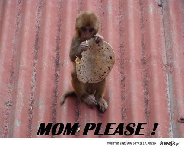 małpka .