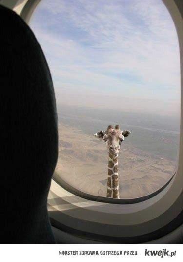 Hej jestem żyrafa