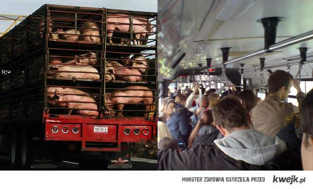 Autobus 194 - wersja zwierzęca i ludzka