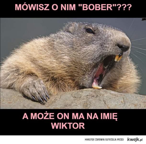 Bobrzyk