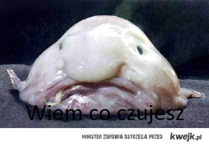 Wiem co czujesz- ryba