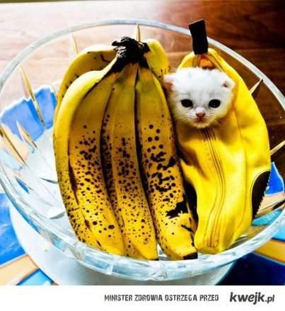I <3 this cat !!
