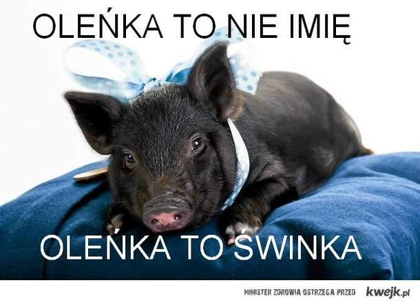 świnka Oleńka