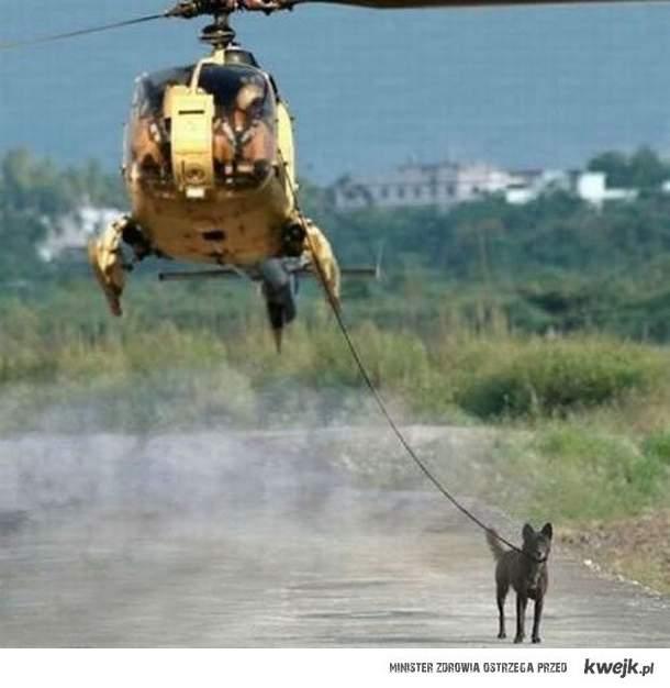 wyprowadzanie psa na spacer level: wojsko
