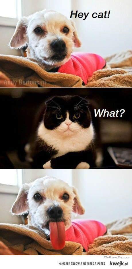 Pies vs. Kot