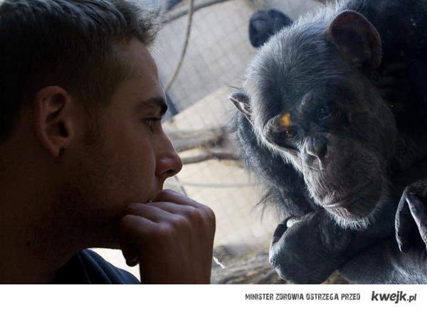 małpa nie kłamie