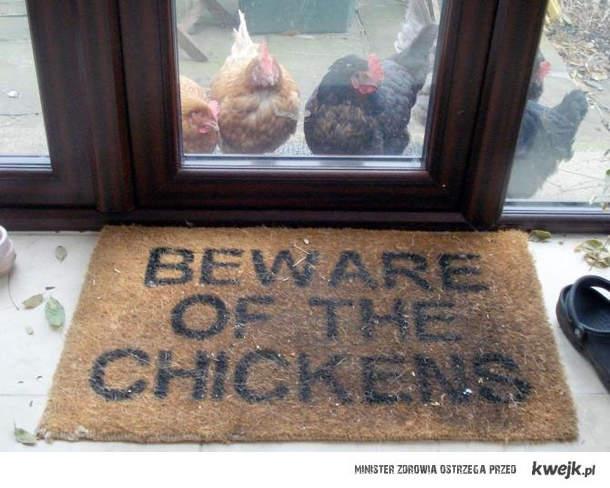 uwaga na kurczaki