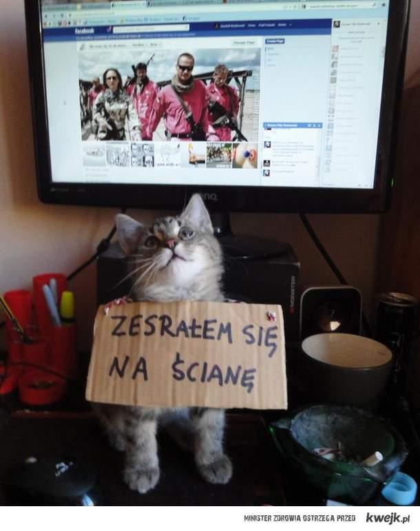 kompromitujące zdjęcie kota