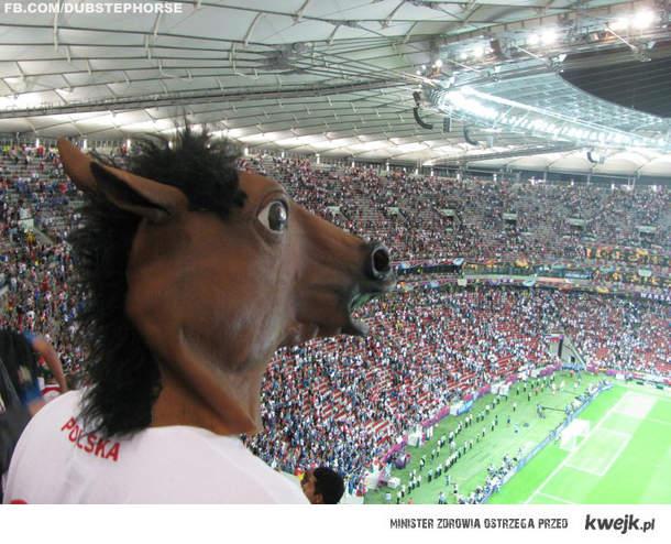 stadion narodowy z perspektywy konia