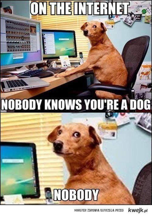 dog? :D