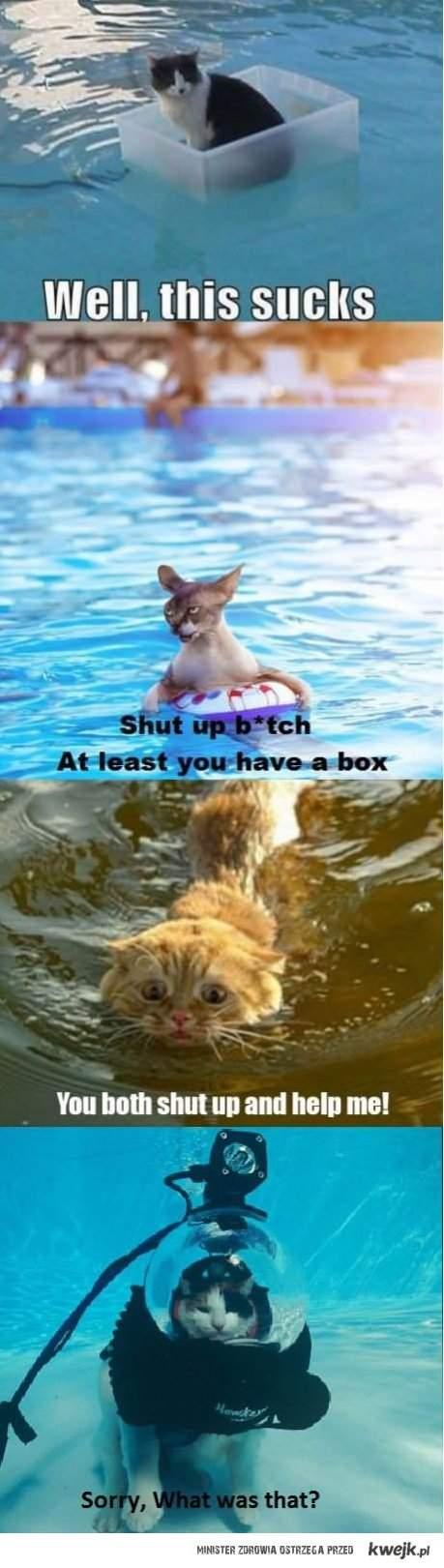 koty w wodzie
