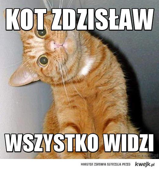 kot zdzisław