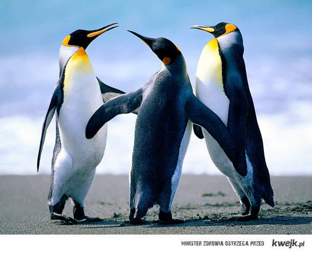 Pingwinkiiii