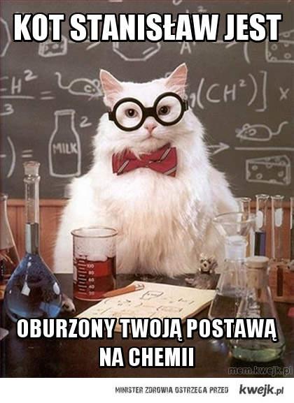 Kot stanisław jest