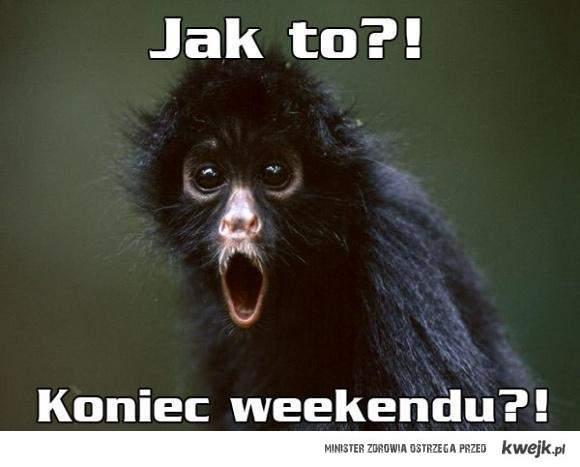 Koniec weekendu ;(
