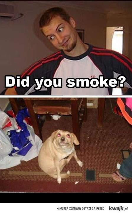 Paliłeś ?