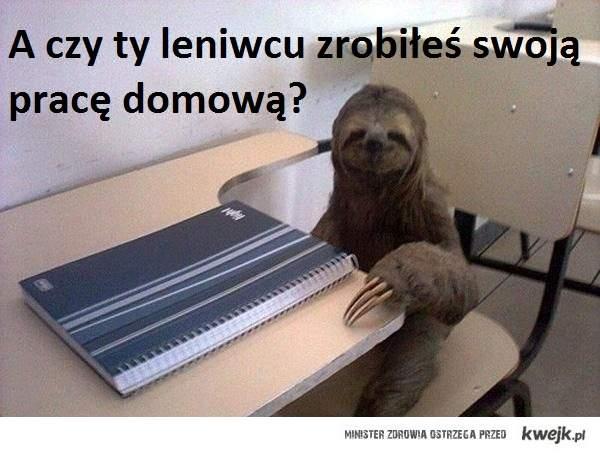 A czy ty leniwcu zrobiłeś swoją pracę domową?