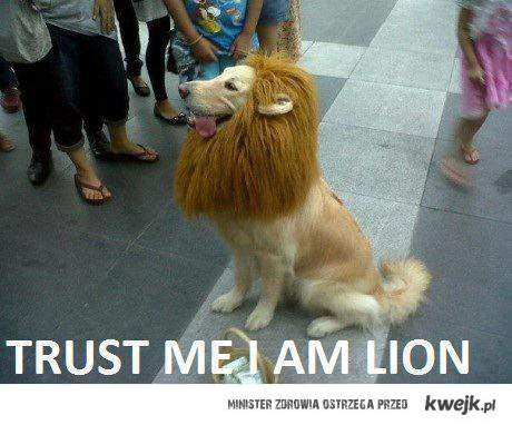 trust me im the lion