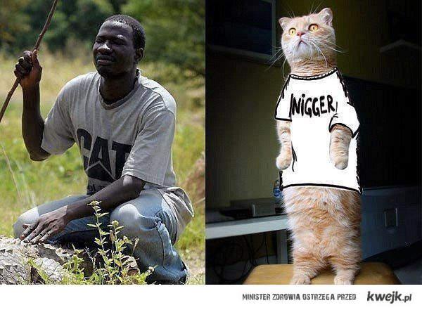 cat nigger