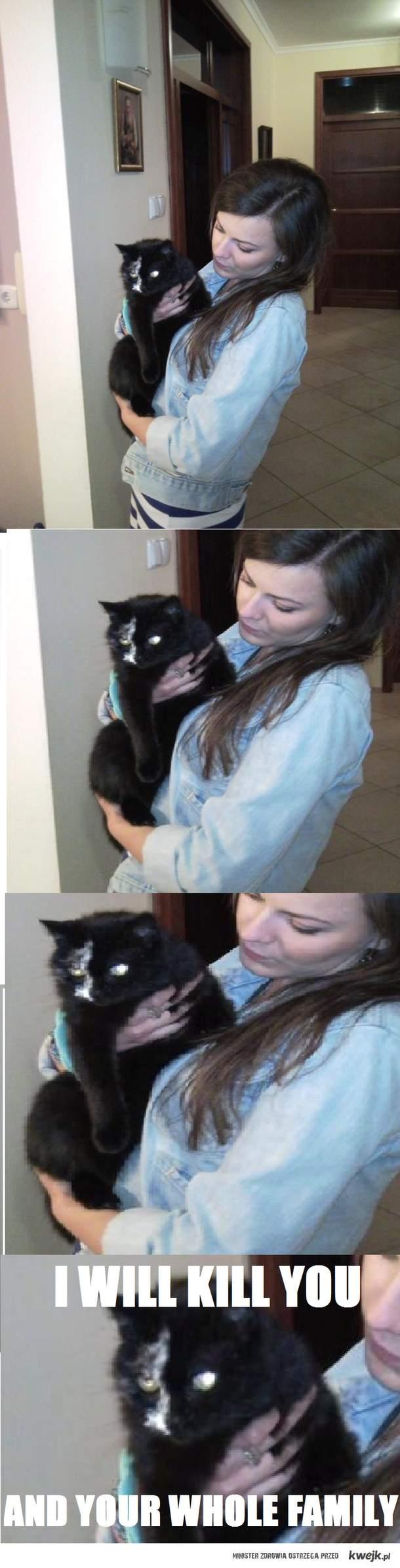 cat kill