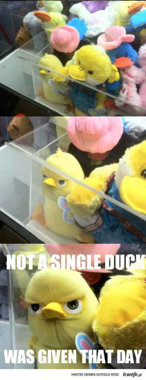 not a single duck