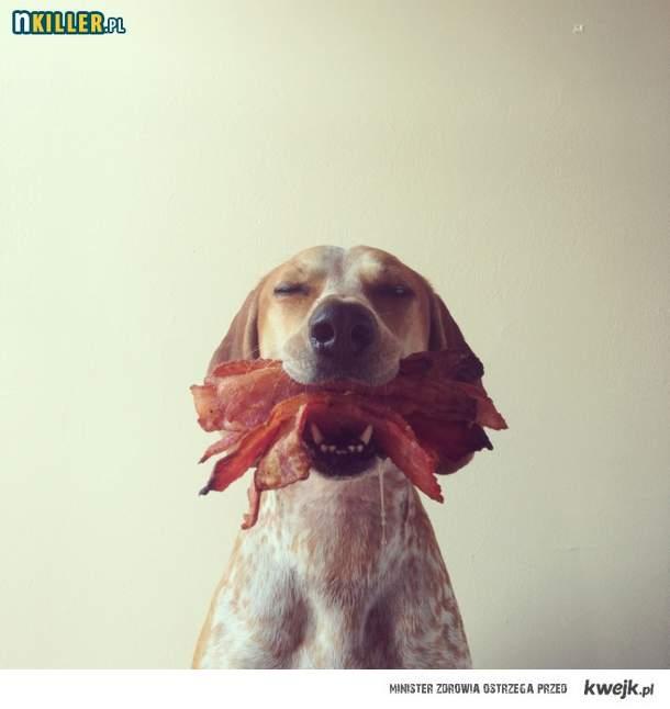 Najszczęśliwszy pies świata