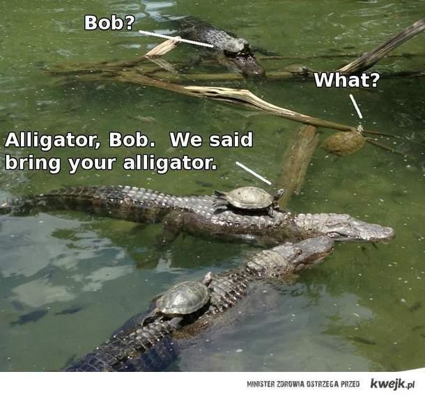 żółwie na aligatorach