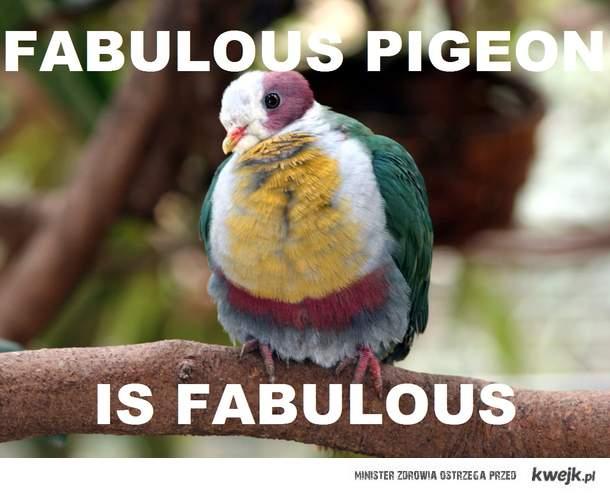 Fabulous pigeon