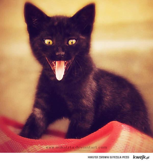 Jeśli lubisz kociaki, polub ;p