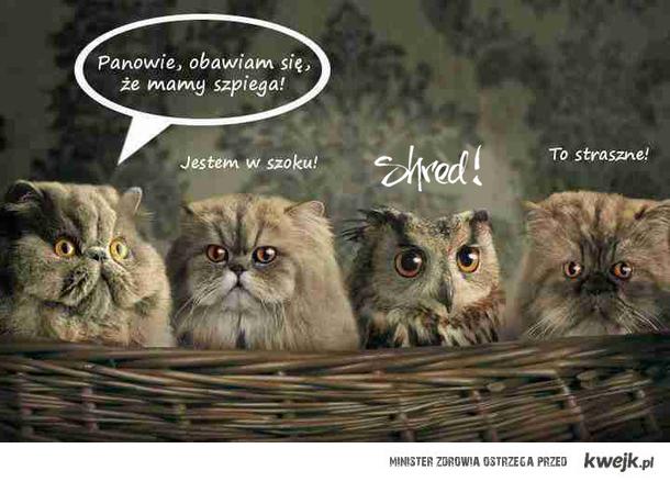 Koty i sowa