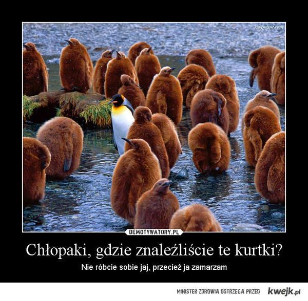 Pingiw bez kórtki