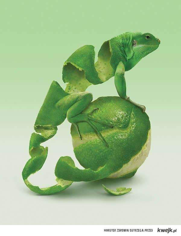 lemonkowa jaszczurka